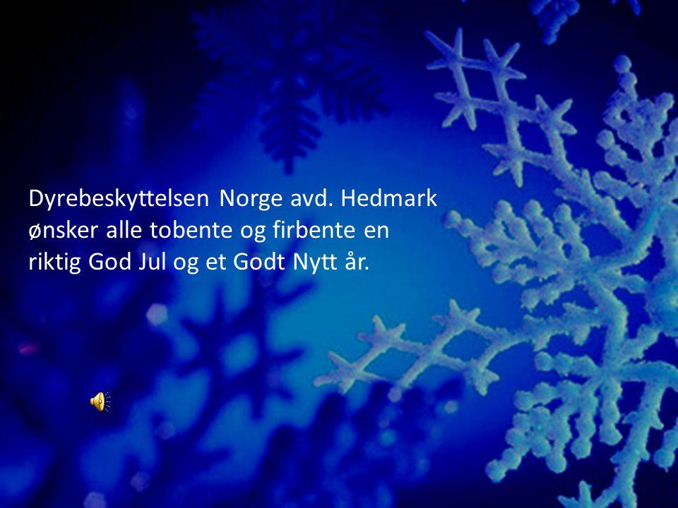Dyrebeskyttelsen Norge avd.