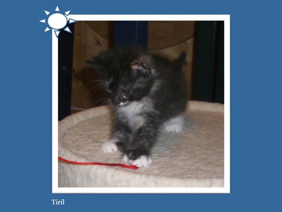 Tiril