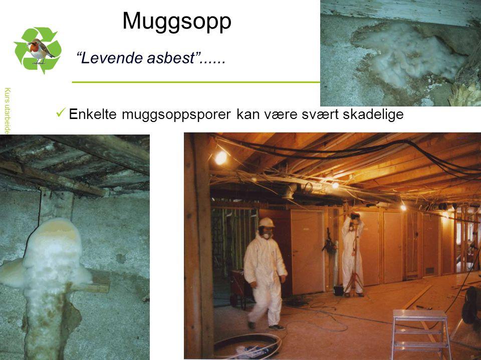 """Kurs utarbeidet av nettverket for Nasjonal handlingsplan for bygg- og anleggsavfall Muggsopp """"Levende asbest""""......  Enkelte muggsoppsporer kan være"""