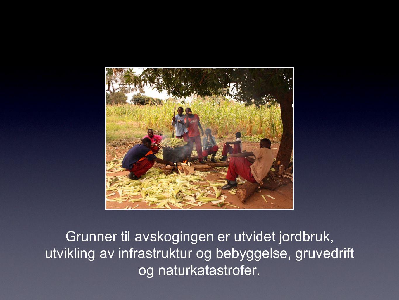 Grunner til avskogingen er utvidet jordbruk, utvikling av infrastruktur og bebyggelse, gruvedrift og naturkatastrofer.