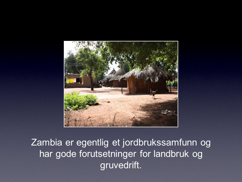 Zambia er egentlig et jordbrukssamfunn og har gode forutsetninger for landbruk og gruvedrift.