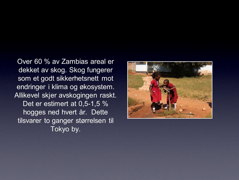 Over 60 % av Zambias areal er dekket av skog.