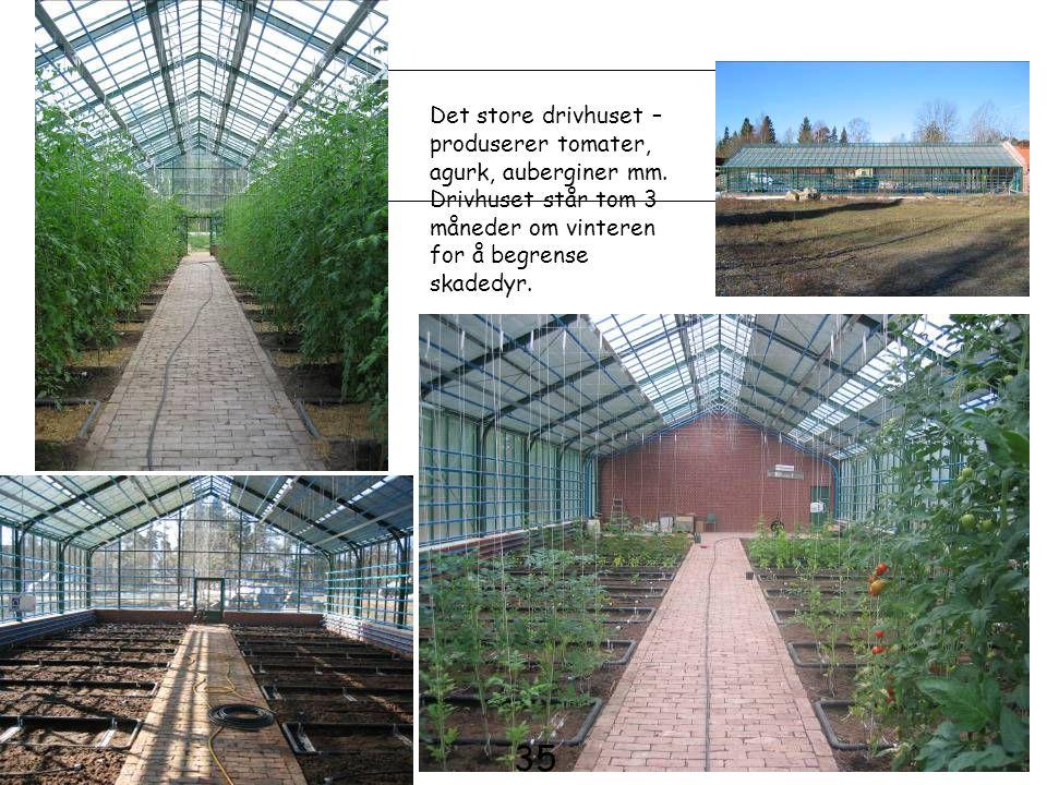 Det store drivhuset – produserer tomater, agurk, auberginer mm. Drivhuset står tom 3 måneder om vinteren for å begrense skadedyr. 35