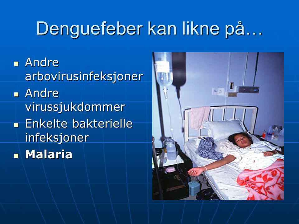 Denguefeber kan likne på…  Andre arbovirusinfeksjoner  Andre virussjukdommer  Enkelte bakterielle infeksjoner  Malaria