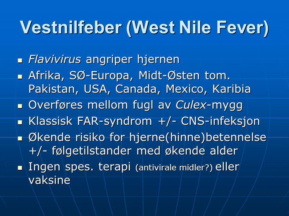 Vestnilfeber (West Nile Fever)  Flavivirus angriper hjernen  Afrika, SØ-Europa, Midt-Østen tom. Pakistan, USA, Canada, Mexico, Karibia  Overføres m