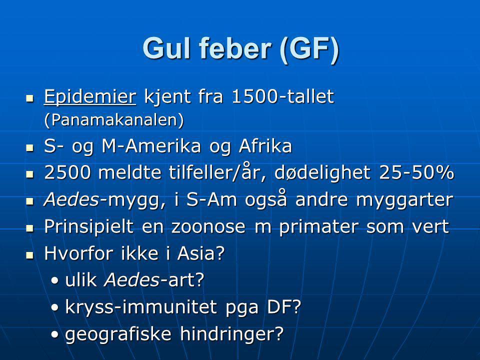Gul feber (GF)  Epidemier kjent fra 1500-tallet (Panamakanalen)  S- og M-Amerika og Afrika  2500 meldte tilfeller/år, dødelighet 25-50%  Aedes-myg