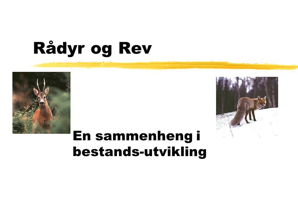 Rådyr og Rev En sammenheng i bestands-utvikling