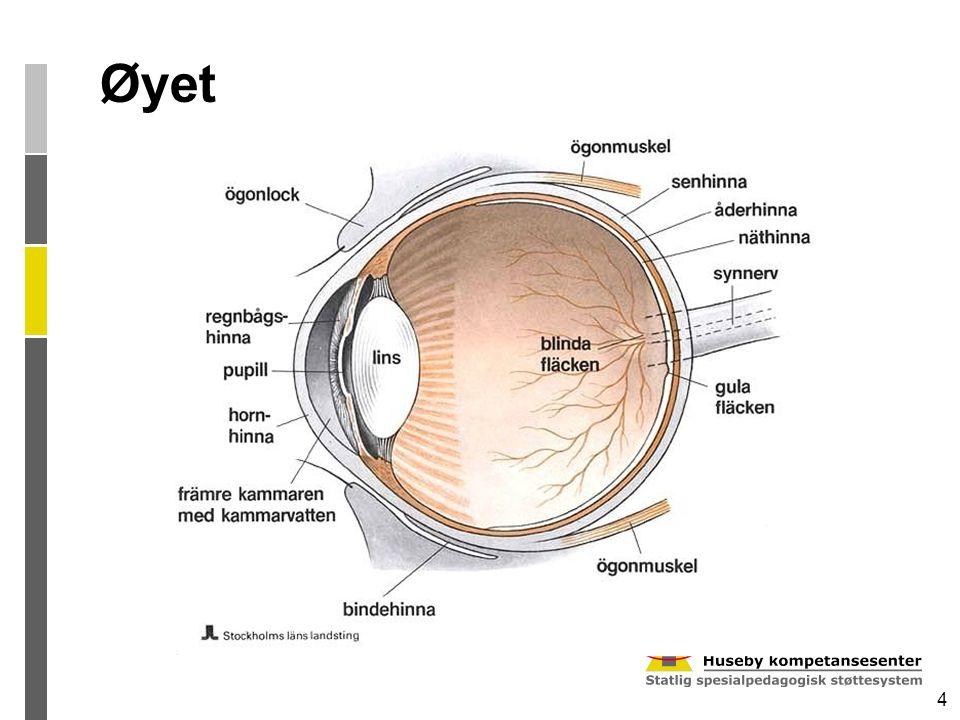 4 Øyet