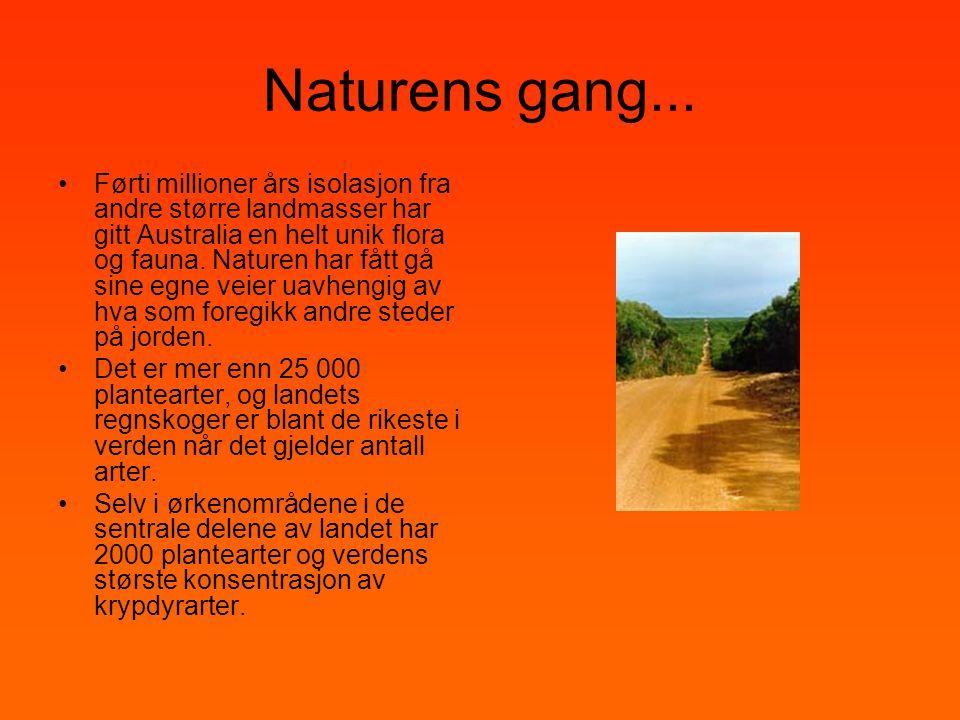 Naturens gang... •Førti millioner års isolasjon fra andre større landmasser har gitt Australia en helt unik flora og fauna. Naturen har fått gå sine e
