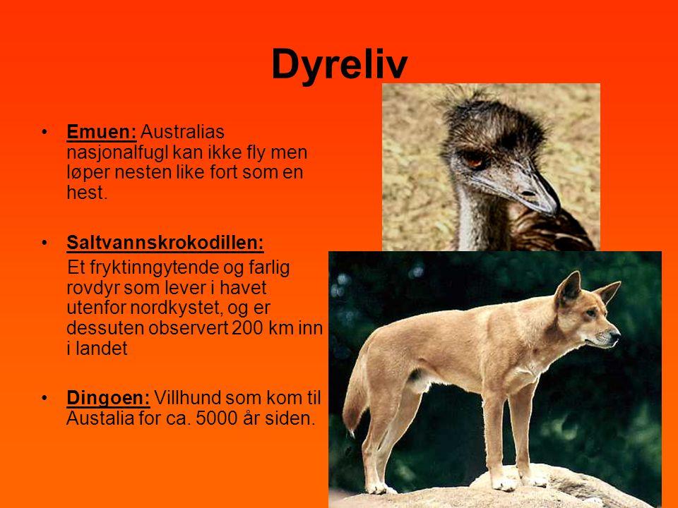 Dyreliv •Emuen: Australias nasjonalfugl kan ikke fly men løper nesten like fort som en hest. •Saltvannskrokodillen: Et fryktinngytende og farlig rovdy