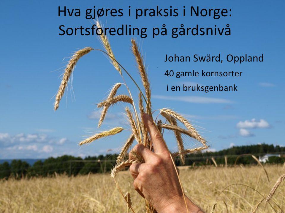 Hva gjøres i praksis i Norge: Sortsforedling på gårdsnivå Johan Swärd, Oppland 40 gamle kornsorter i en bruksgenbank