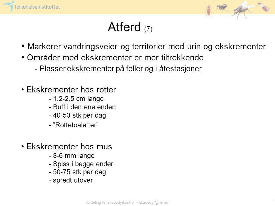 Avdeling for skadedyrkontroll – skadedyr@fhi.no Atferd (7) • Markerer vandringsveier og territorier med urin og ekskrementer • Områder med ekskremente