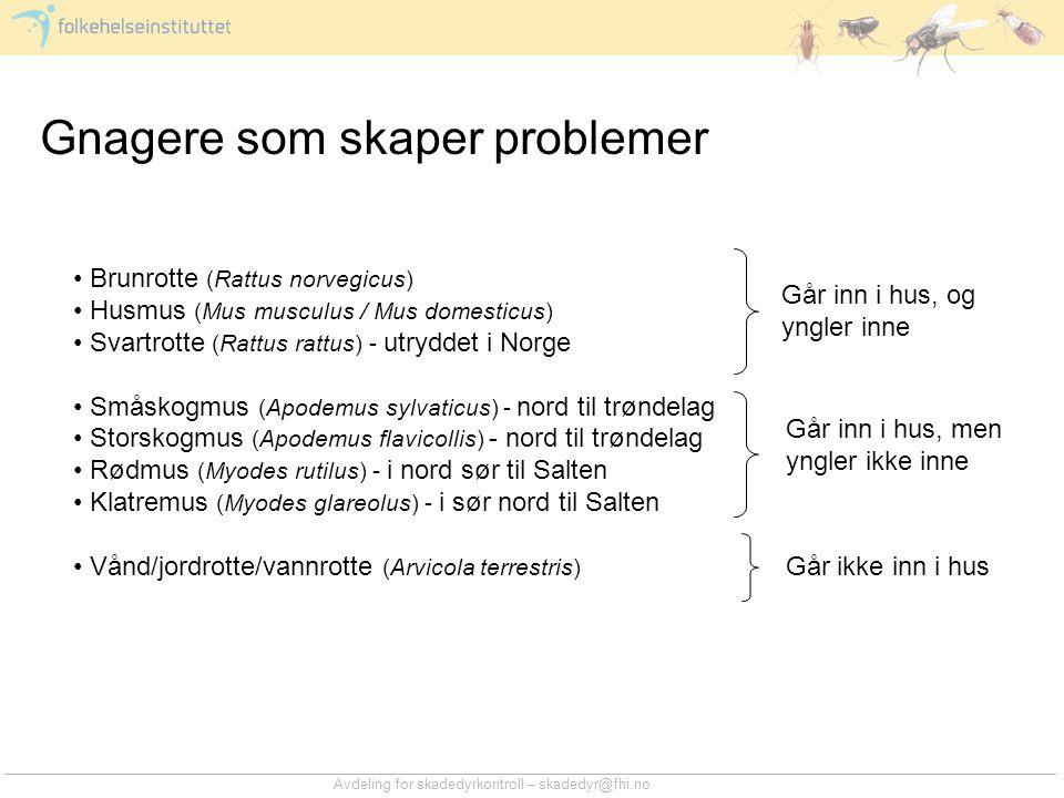 Avdeling for skadedyrkontroll – skadedyr@fhi.no Gnagere som skaper problemer • Brunrotte (Rattus norvegicus) • Husmus (Mus musculus / Mus domesticus)