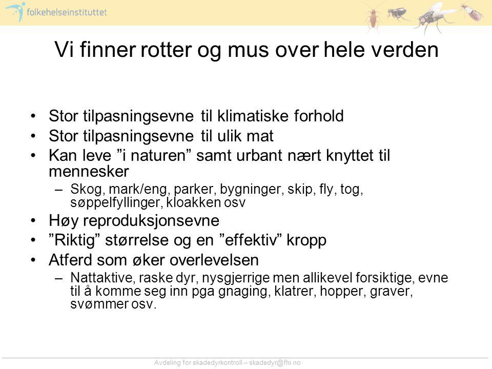 Avdeling for skadedyrkontroll – skadedyr@fhi.no Vi finner rotter og mus over hele verden •Stor tilpasningsevne til klimatiske forhold •Stor tilpasning