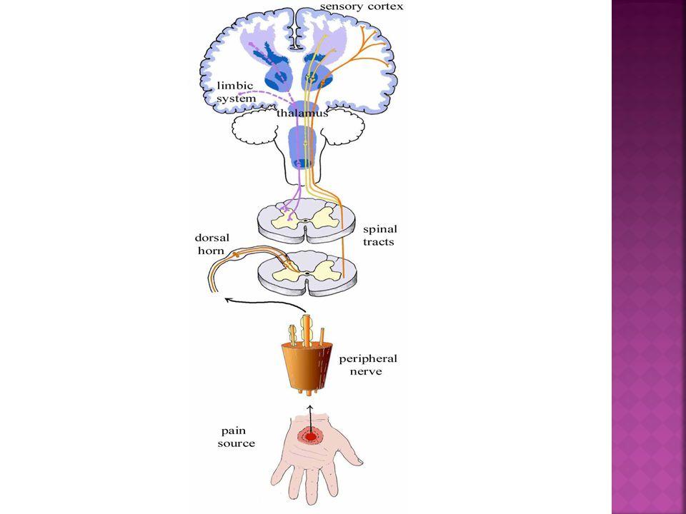  Antiepileptica: Carbamacepin  Tegretol Clonacepam  Rivotril, Gabapentin  Neurontin Pregabalin  Lyrica Lamotrigin  Lamictal Antidepressiva:Tricyklisk  Sarotex NMDA-hemmere: Ketamin  Ketalar