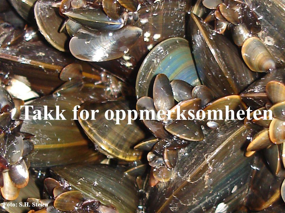 22 Takk for oppmerksomheten Foto: S.H. Steien