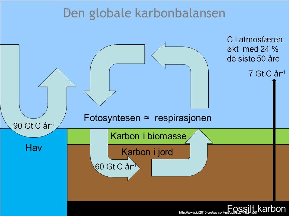 Den globale karbonbalansen Karbon i biomasse Karbon i jord Fossilt karbon 7 Gt C år -1 60 Gt C år -1 Fotosyntesen ≈ respirasjonen http://www.ibi2010.o