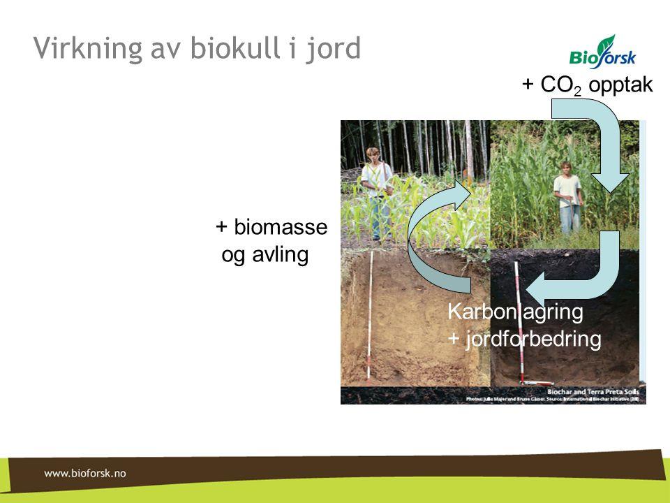 + CO 2 opptak Karbonlagring + jordforbedring + biomasse og avling Virkning av biokull i jord