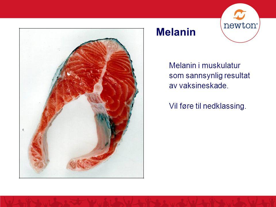 Melanin Melanin i muskulatur som sannsynlig resultat av vaksineskade. Vil føre til nedklassing.
