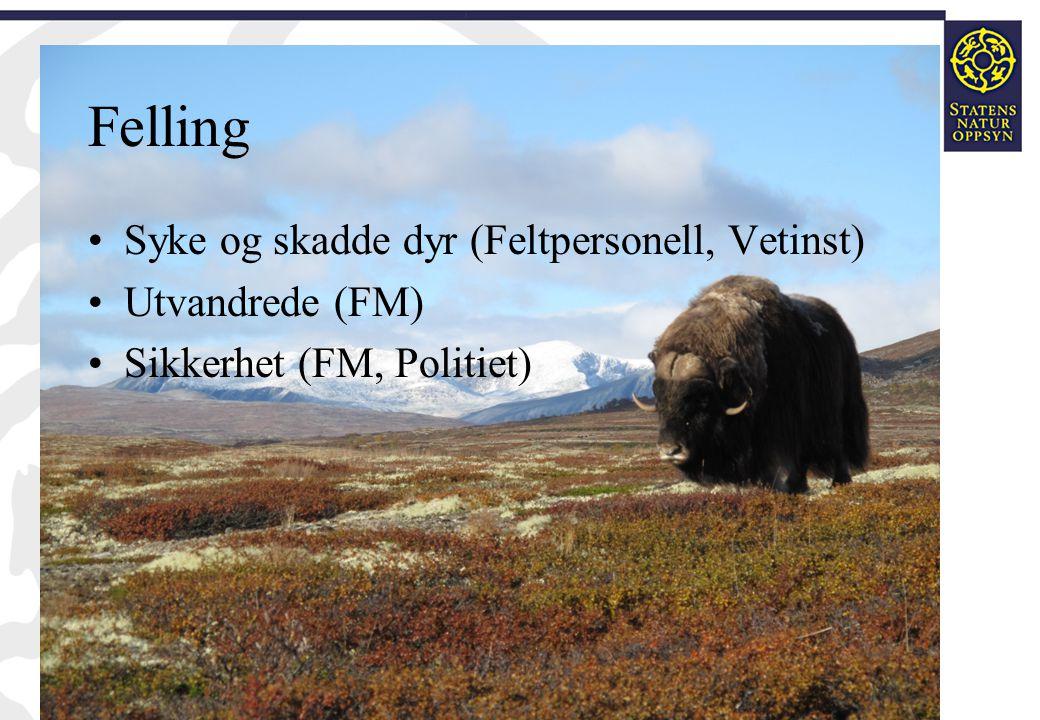 Felling •Syke og skadde dyr (Feltpersonell, Vetinst) •Utvandrede (FM) •Sikkerhet (FM, Politiet)