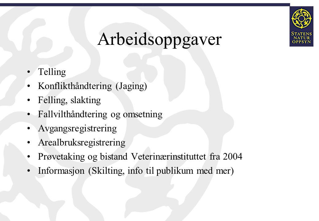 Arbeidsoppgaver •Telling •Konflikthåndtering (Jaging) •Felling, slakting •Fallvilthåndtering og omsetning •Avgangsregistrering •Arealbruksregistrering