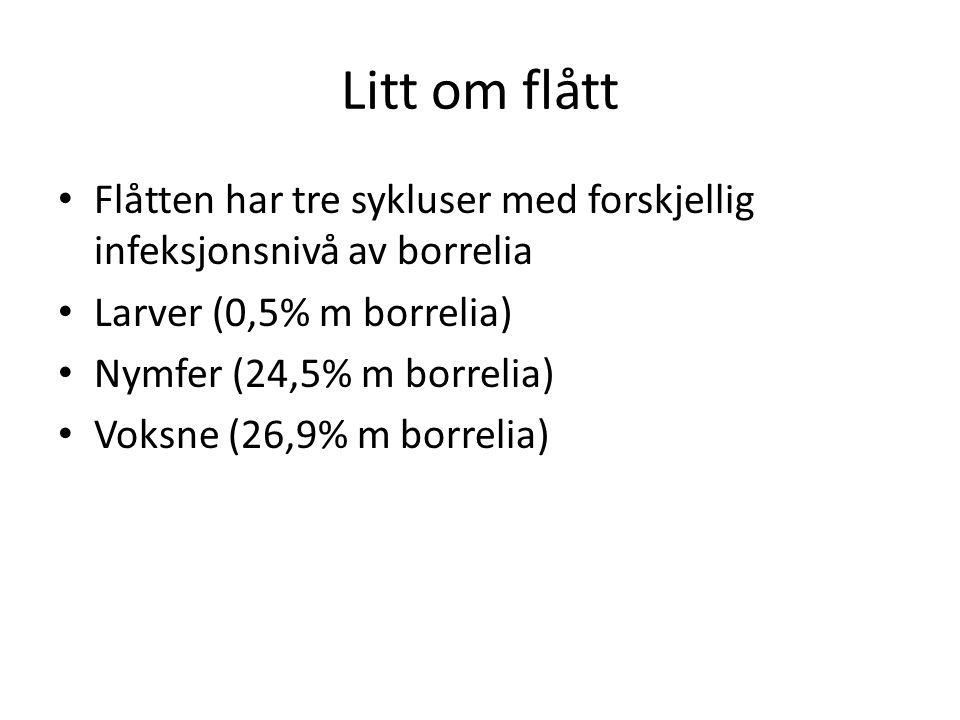 Litt om flått • Flåtten har tre sykluser med forskjellig infeksjonsnivå av borrelia • Larver (0,5% m borrelia) • Nymfer (24,5% m borrelia) • Voksne (26,9% m borrelia)