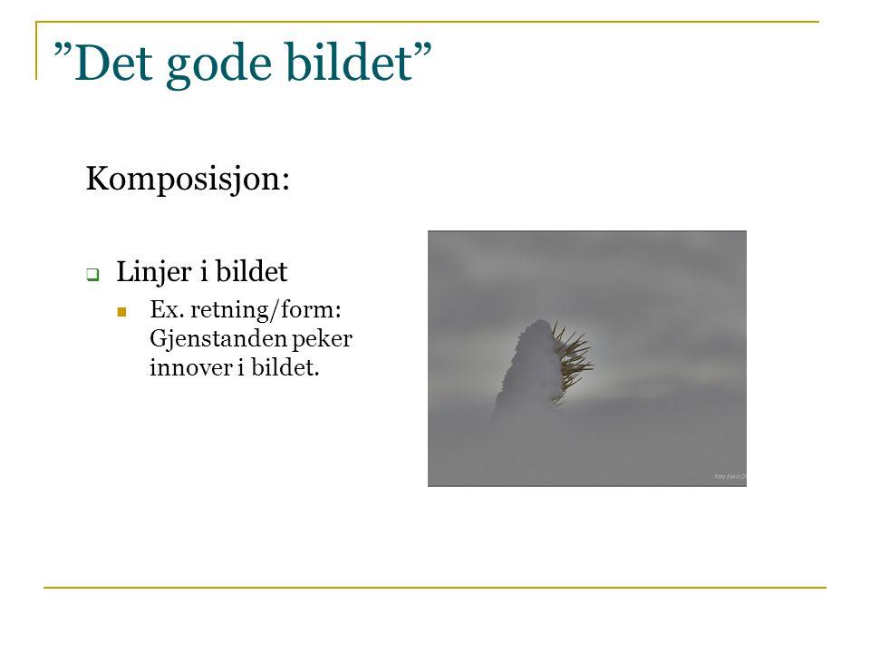 """""""Det gode bildet"""" Komposisjon:  Linjer i bildet  Ex. retning/form: Gjenstanden peker innover i bildet."""