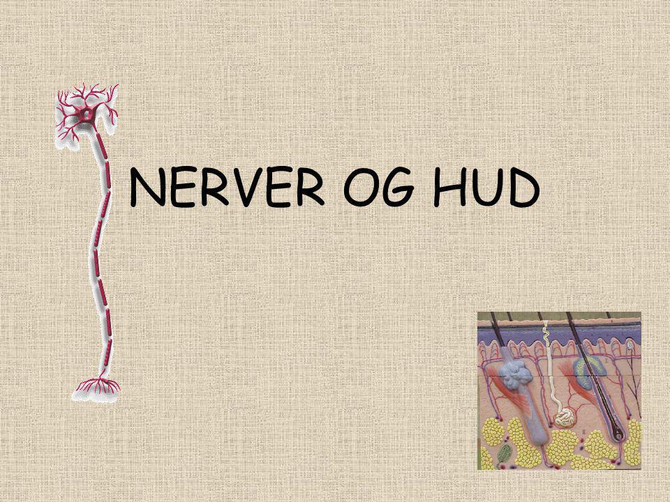 Det er mange tråder mellom nervecellene