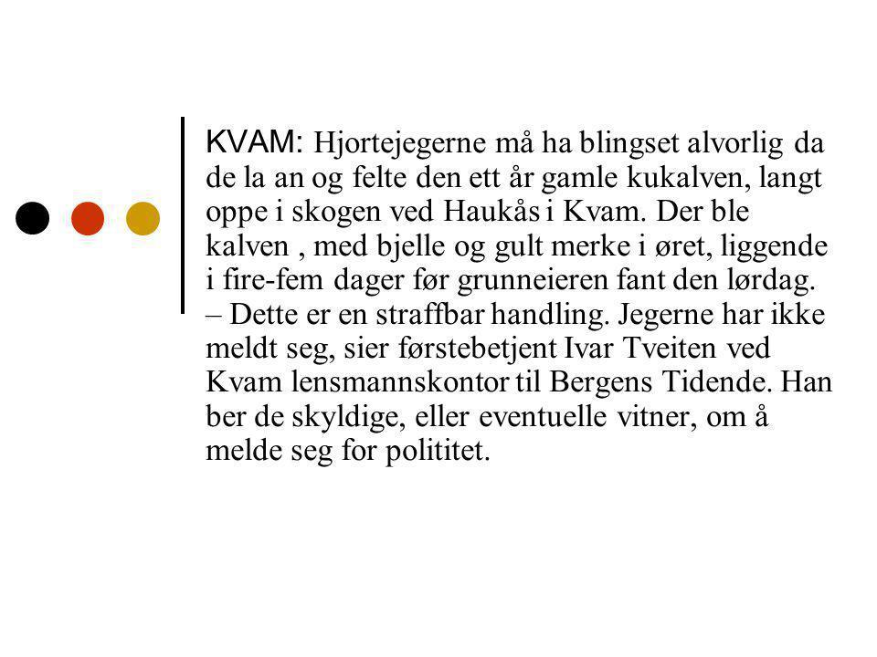 Vinklinger i titler Kukalv skutt under hjortejakten Sak- / faktavinkling Fortvilet eier fant skutt kalv.