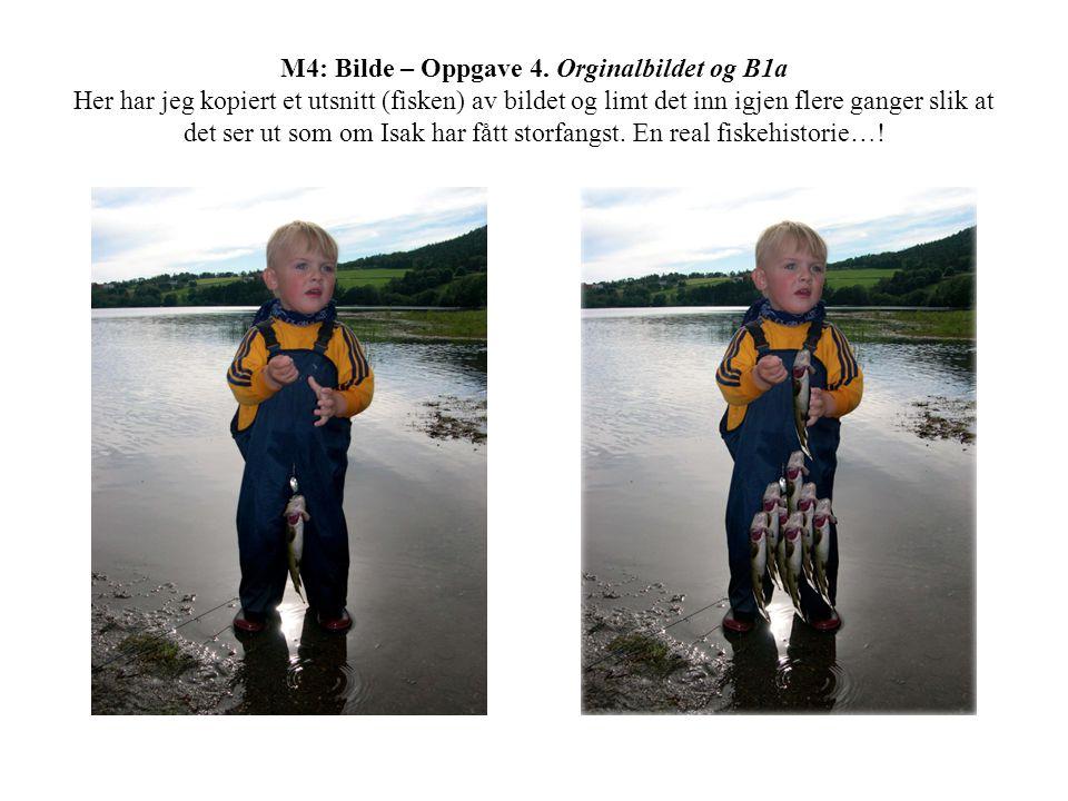 M4: Bilde – Oppgave 4. Orginalbildet og B1a Her har jeg kopiert et utsnitt (fisken) av bildet og limt det inn igjen flere ganger slik at det ser ut so