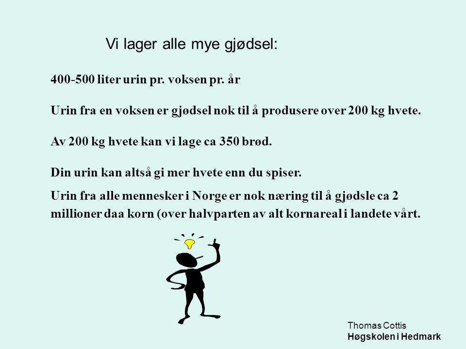 Thomas Cottis Høgskolen i Hedmark 400-500 liter urin pr. voksen pr. år Urin fra en voksen er gjødsel nok til å produsere over 200 kg hvete. Av 200 kg