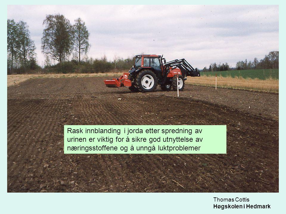 Thomas Cottis Høgskolen i Hedmark Rask innblanding i jorda etter spredning av urinen er viktig for å sikre god utnyttelse av næringsstoffene og å unng