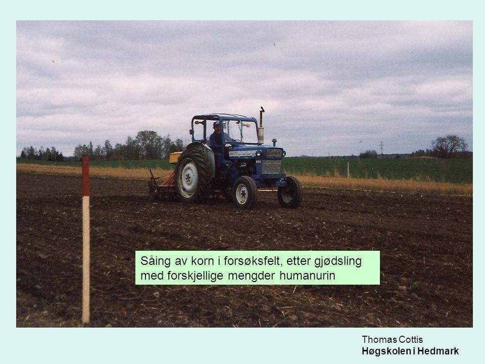 Thomas Cottis Høgskolen i Hedmark Såing av korn i forsøksfelt, etter gjødsling med forskjellige mengder humanurin