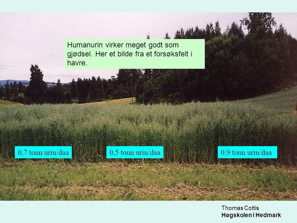 Thomas Cottis Høgskolen i Hedmark •0,6-1,0 tonn humanurin pr daa er fullgod gjødsel til korn eller grønnfôrvekster.