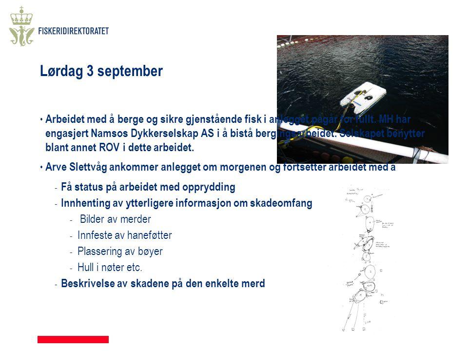 Lørdag 3 september • Arbeidet med å berge og sikre gjenstående fisk i anlegget pågår for fullt. MH har engasjert Namsos Dykkerselskap AS i å bistå ber