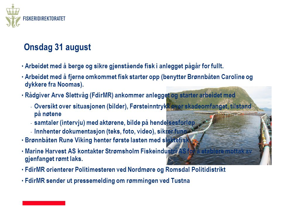 Onsdag 31 august • Arbeidet med å berge og sikre gjenstående fisk i anlegget pågår for fullt. • Arbeidet med å fjerne omkommet fisk starter opp (benyt