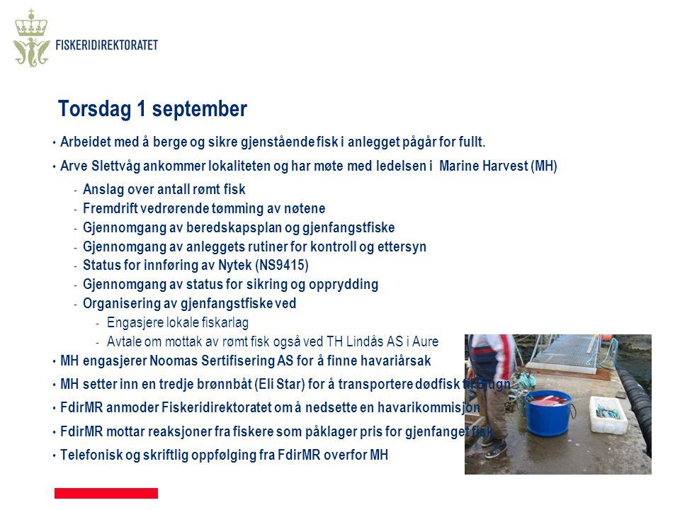 Torsdag 1 september • Arbeidet med å berge og sikre gjenstående fisk i anlegget pågår for fullt. • Arve Slettvåg ankommer lokaliteten og har møte med