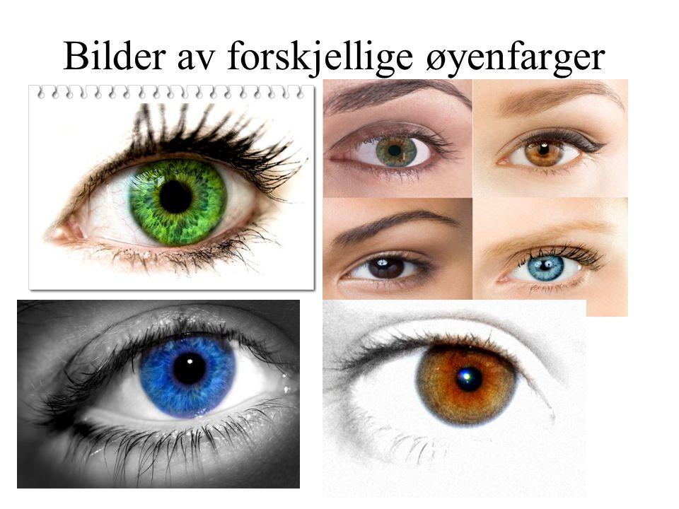 Bilder av forskjellige øyenfarger
