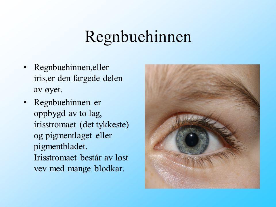 Regnbuehinnen •Regnbuehinnen,eller iris,er den fargede delen av øyet. •Regnbuehinnen er oppbygd av to lag, irisstromaet (det tykkeste) og pigmentlaget