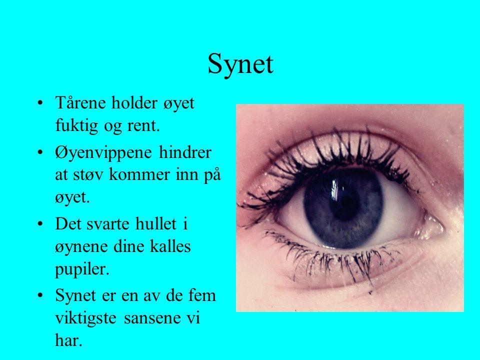 Synet •Tårene holder øyet fuktig og rent. •Øyenvippene hindrer at støv kommer inn på øyet. •Det svarte hullet i øynene dine kalles pupiler. •Synet er