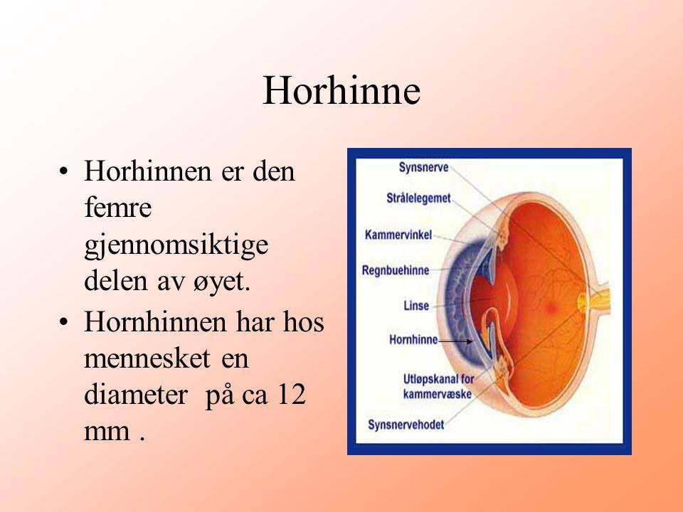 Horhinne •Horhinnen er den femre gjennomsiktige delen av øyet. •Hornhinnen har hos mennesket en diameter på ca 12 mm.