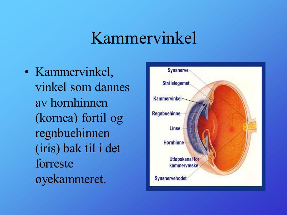 Strålelegmet •Strålelegemet, ciliærlegemet, corpus ciliare, del av øyets århinne som ligger like bakenfor den perifere delen av regnbuehinnen.