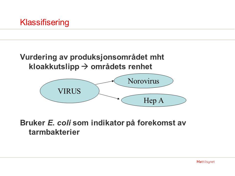 Klassifisering Vurdering av produksjonsområdet mht kloakkutslipp  områdets renhet Bruker E. coli som indikator på forekomst av tarmbakterier VIRUS No