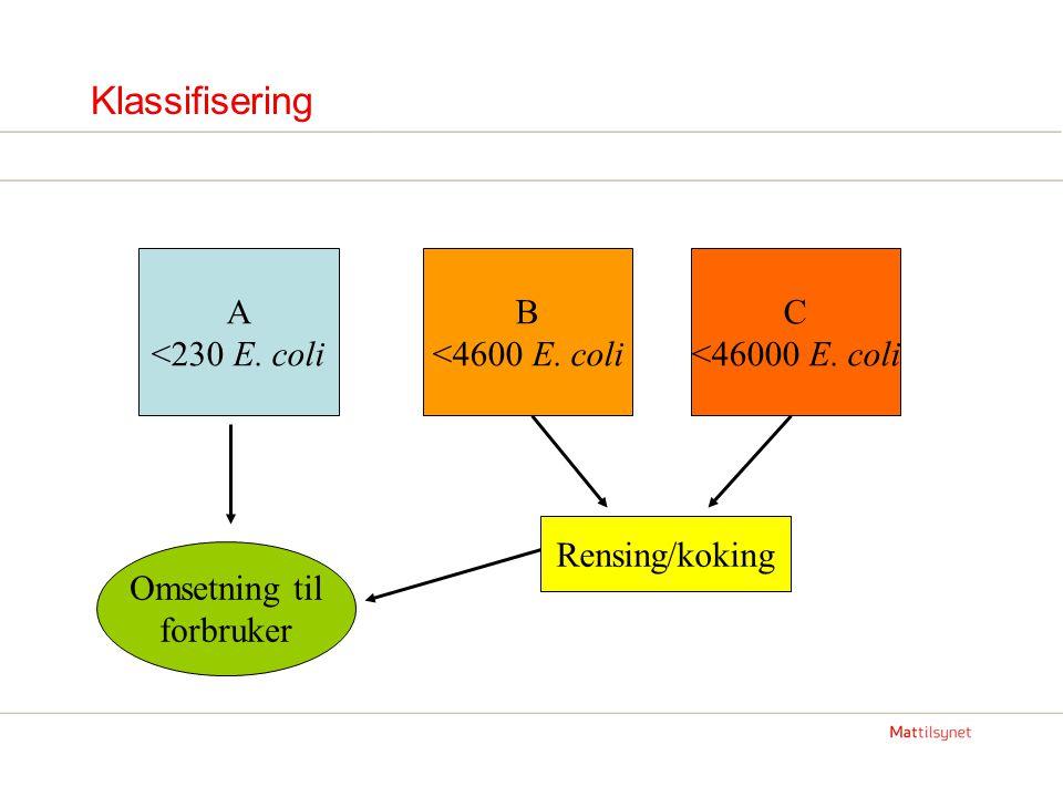 Klassifisering A <230 E. coli B <4600 E. coli C <46000 E. coli Rensing/koking Omsetning til forbruker