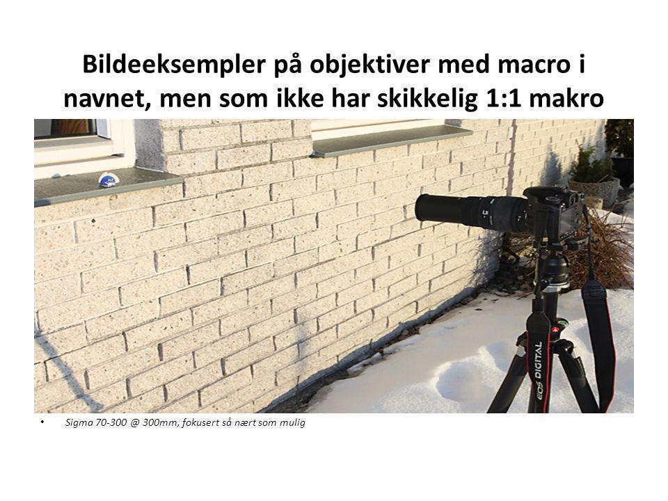 Bildeeksempler på objektiver med macro i navnet, men som ikke har skikkelig 1:1 makro • Sigma 70-300 @ 300mm, fokusert så nært som mulig