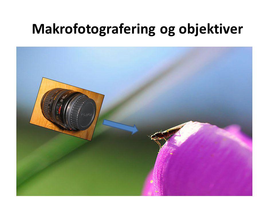Makrofotografering og objektiver