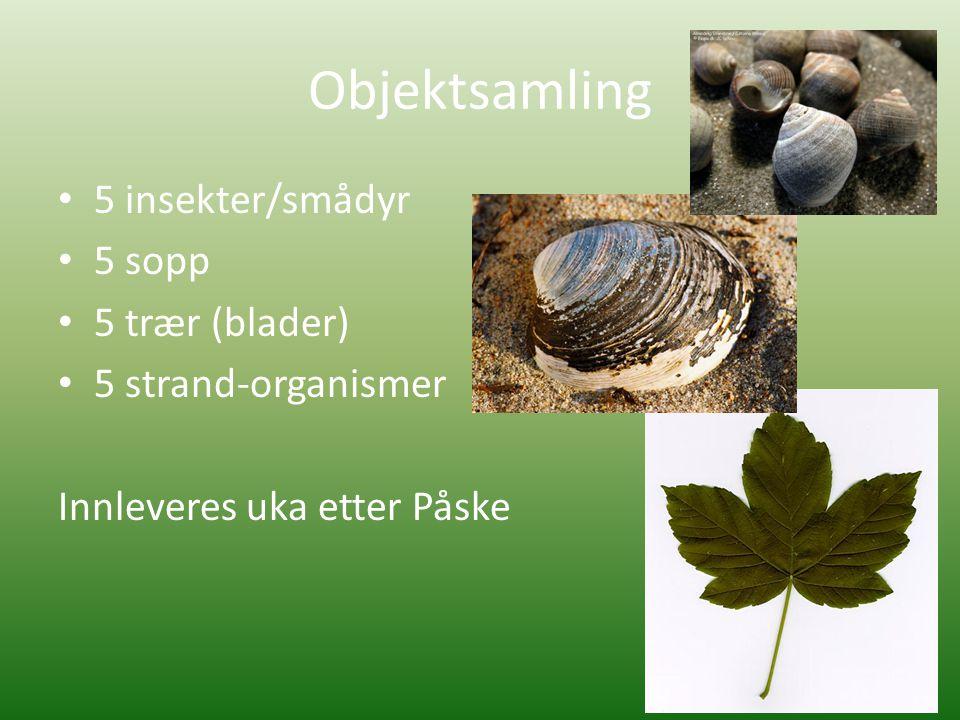 Objektsamling • 5 insekter/smådyr • 5 sopp • 5 trær (blader) • 5 strand-organismer Innleveres uka etter Påske