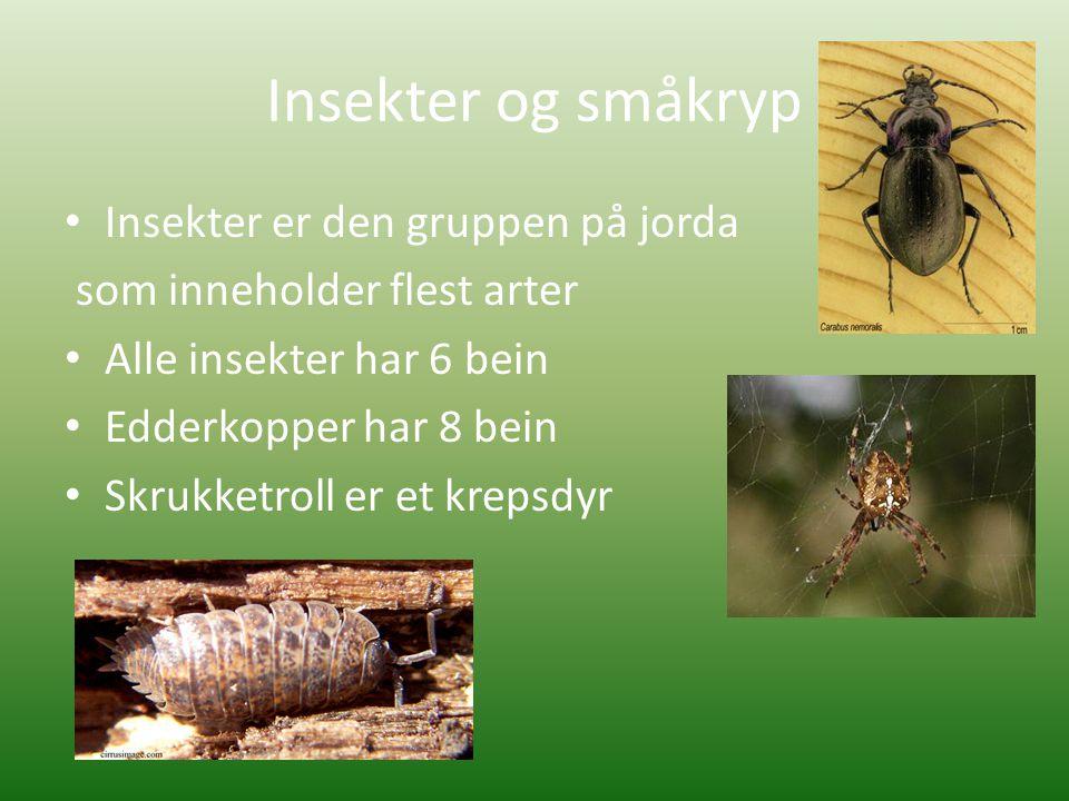 Insekter og småkryp • Insekter er den gruppen på jorda som inneholder flest arter • Alle insekter har 6 bein • Edderkopper har 8 bein • Skrukketroll er et krepsdyr
