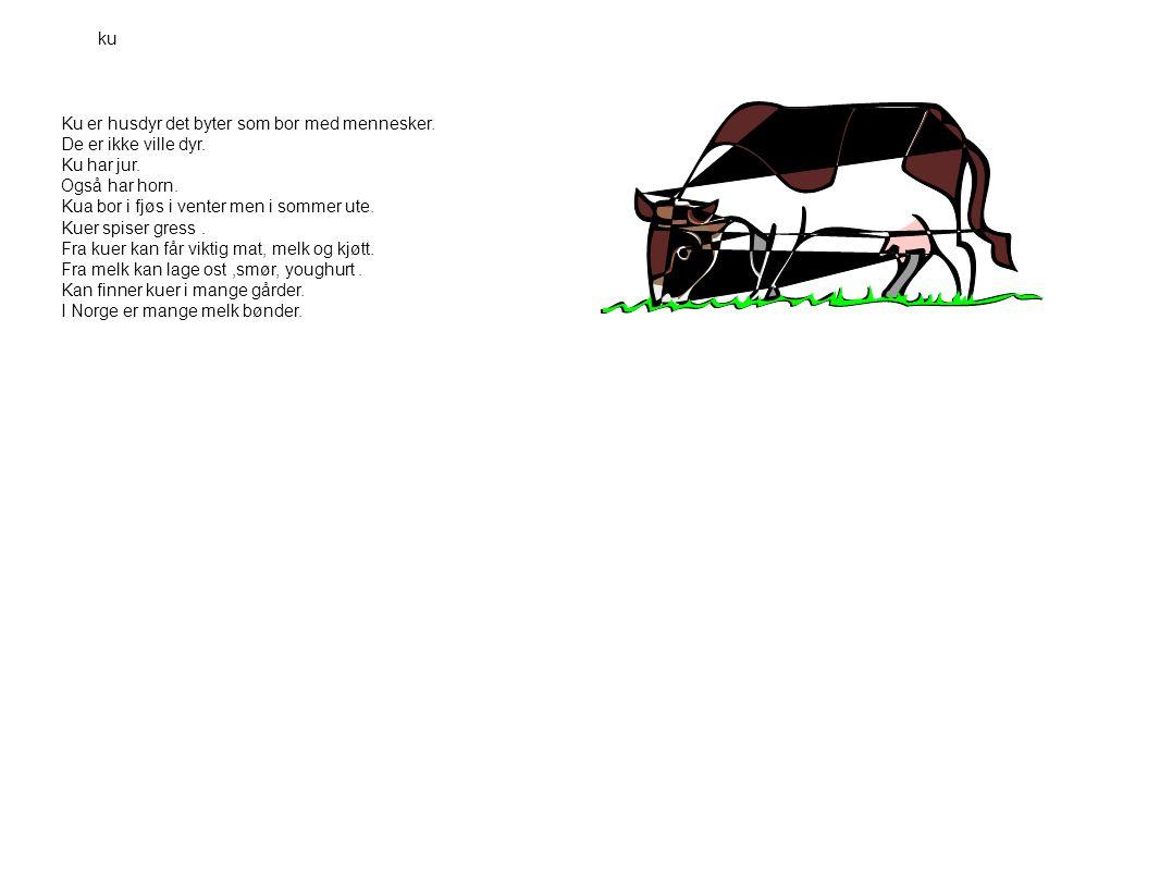 Ku er husdyr det byter som bor med mennesker. De er ikke ville dyr. Ku har jur. Også har horn. Kua bor i fjøs i venter men i sommer ute. Kuer spiser g