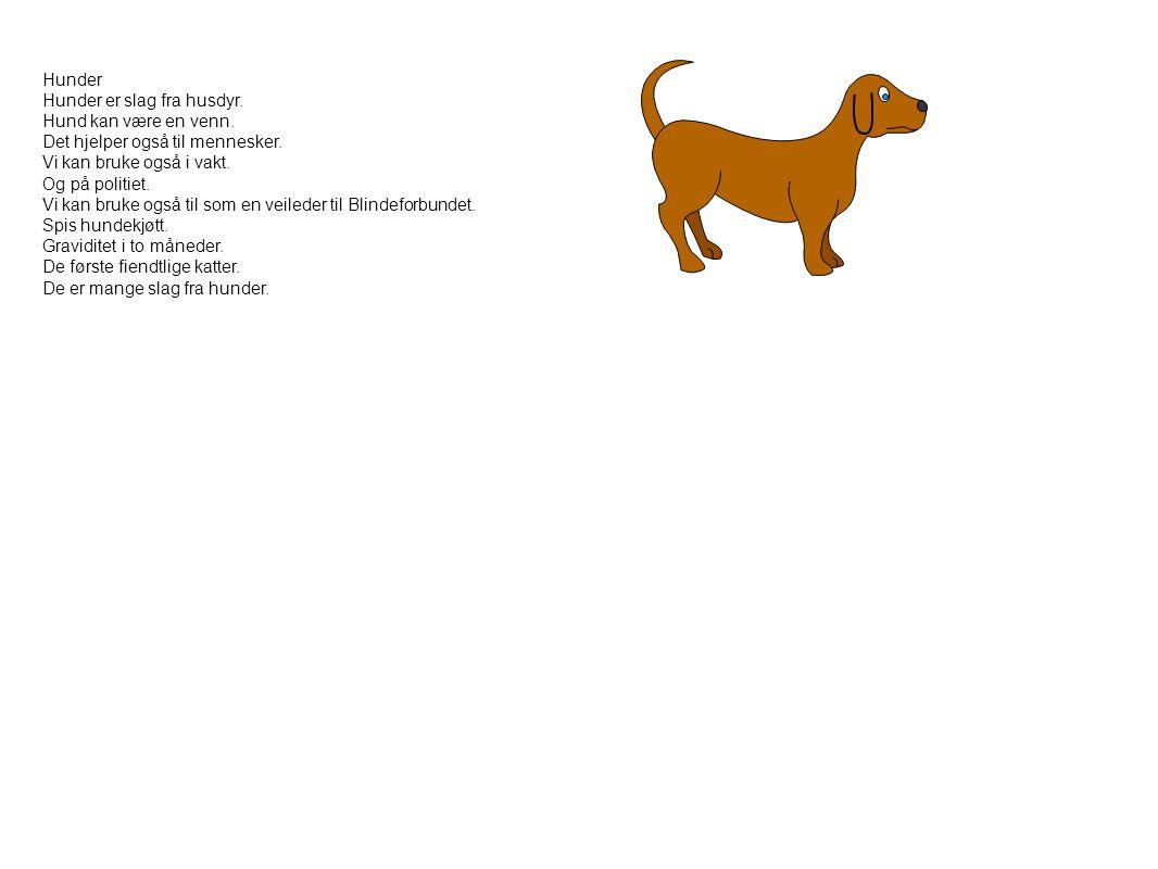 Hunder Hunder er slag fra husdyr. Hund kan være en venn. Det hjelper også til mennesker. Vi kan bruke også i vakt. Og på politiet. Vi kan bruke også t